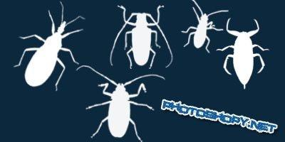 Ксти - жуки