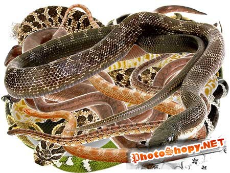 PSD Исходник для фотошоп - Змеи