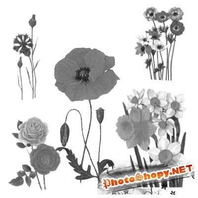 Кисти для фотошопа - Цветочки