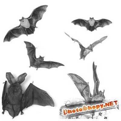 Кисти для фотошопа - Летучие мыши