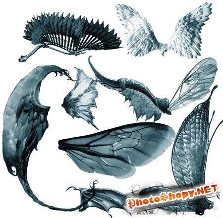 Кисти для фотошопа - Крылья