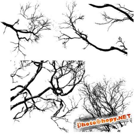 Кисть для фотошопа -Деревья