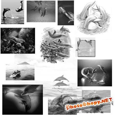 Кисть для фотошопа - Дельфины