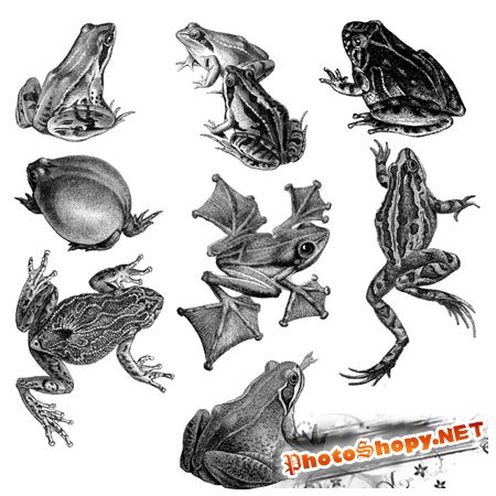 Кисти для фотошоп - Лягушки