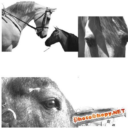 Кисти для фотошоп - Лошади