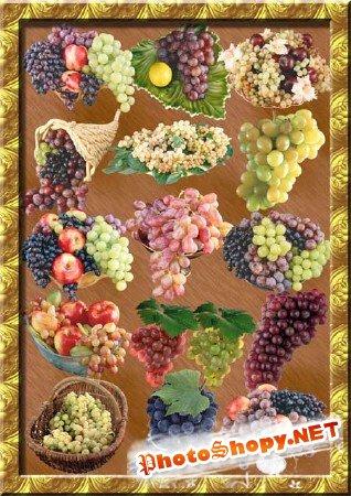 Клипарт - Виноградное изобилие