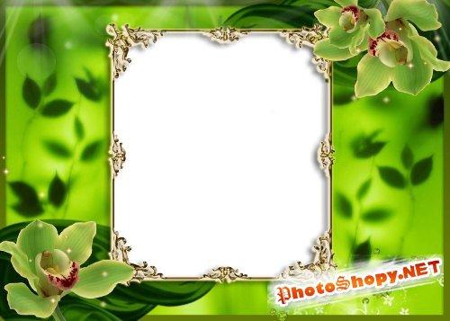 Рамка для фотошоп – Зеленая с орхидеями