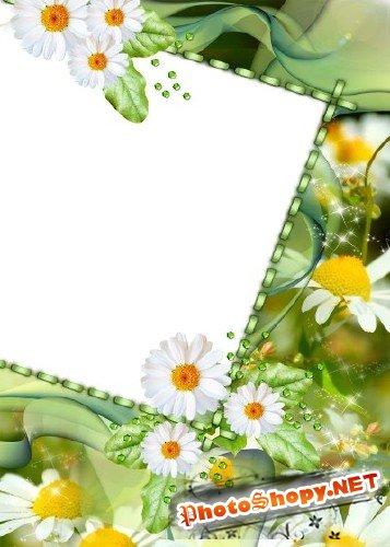 Рамка для фотошоп – В ромашках