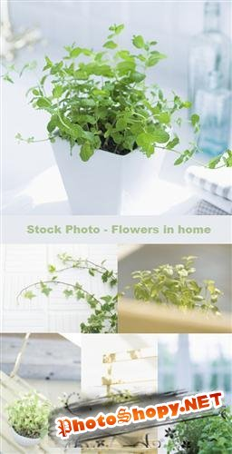 Stock Photo - flowers in home