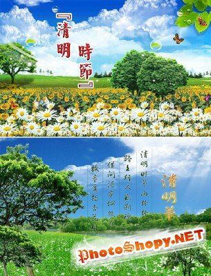 "PSD templates ""Flowers on the field"""
