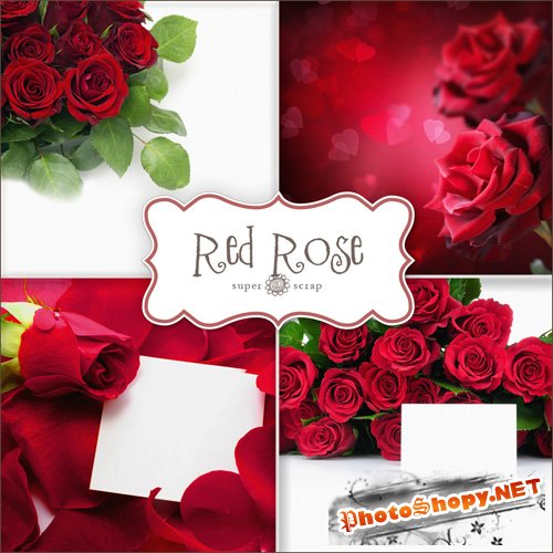 Textures - Red Roses Backgrounds