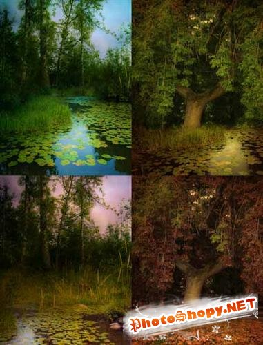 Wood and pond (backgrounds)