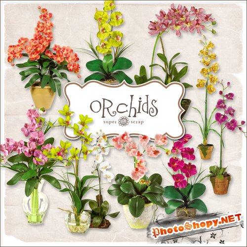 Scrap-kit - Orchids