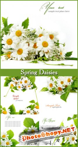Spring Daisies - Stock Photos