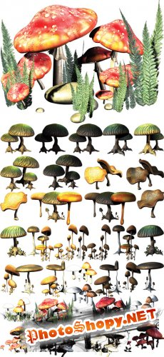 PSD Cliparts - Fantasy Mushrooms