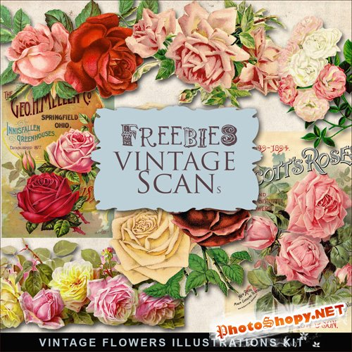 Scrap-kit - Vintage Flowers Illustrations #8