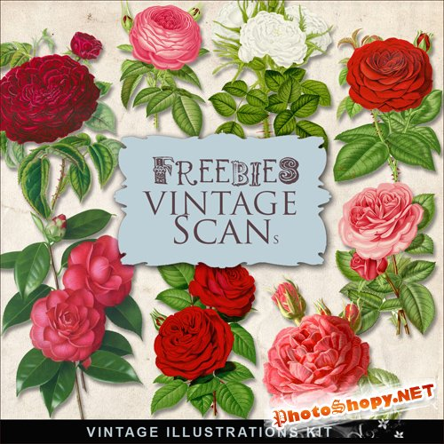 Scrap-kit - Vintage Roses Illustrations