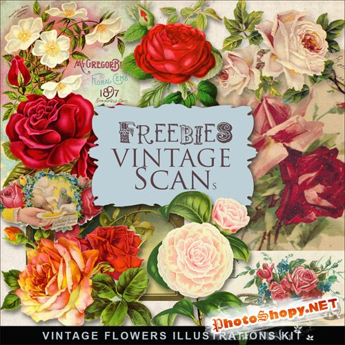 Scrap-kit - Vintage Flowers Illustrations #9