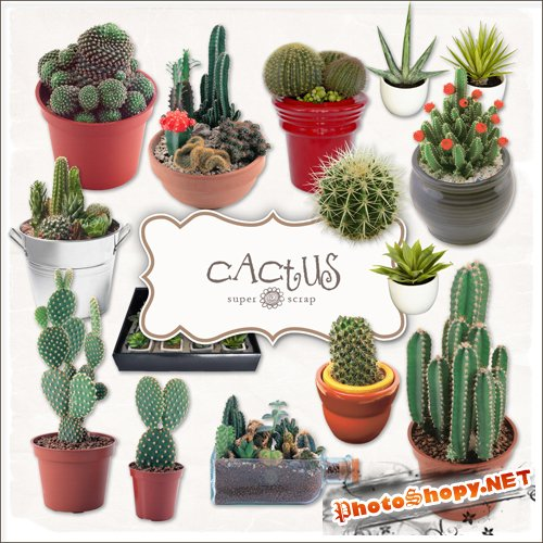 Scrap-kit - Cactus Set