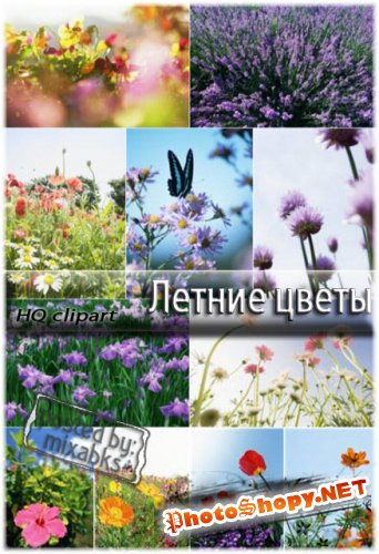 Летние цветы | Summer fields (UHQ clipart)