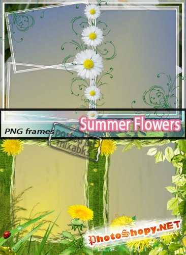 Летние Цветы | Summer Flowers (PNG frames)