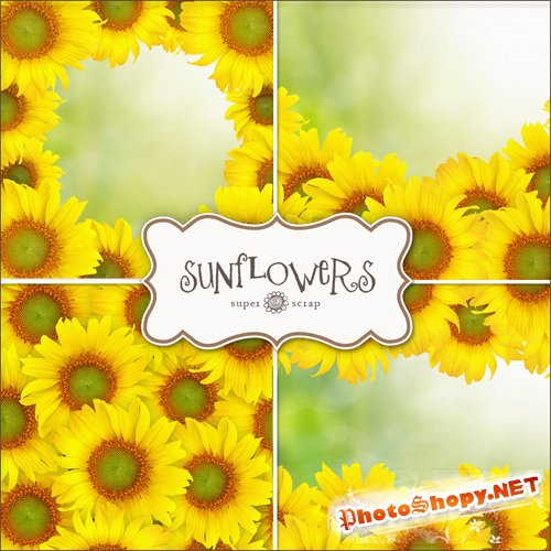 Textures - Sunflowers Backgrounds