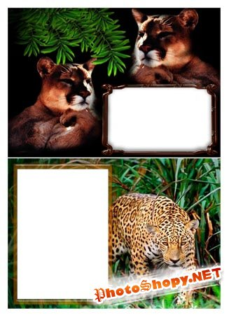 Дикая природа | Wild Nature (PNG frames)