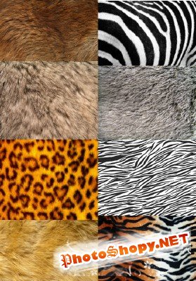 A set of textures wild animals