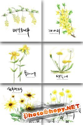 Flower backgrounds pack 8