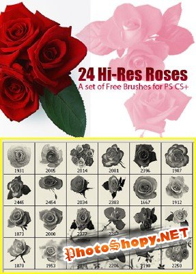 A set of free brushes red roses