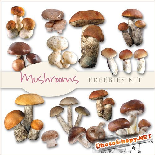 Scrap-kit - Mushrooms Images #1