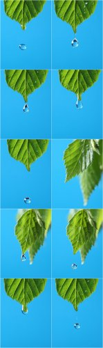 Photo Cliparts - Drop in green leaves