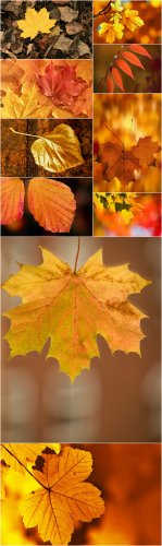 Photo Cliparts - Autumn leaves