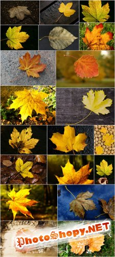 Photo Cliparts - Falling leaf