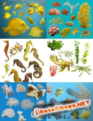 Underwater plants, seahorses, white coral and yellow fish