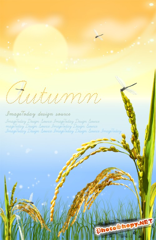 Golden autumn grain rice PSD layered material