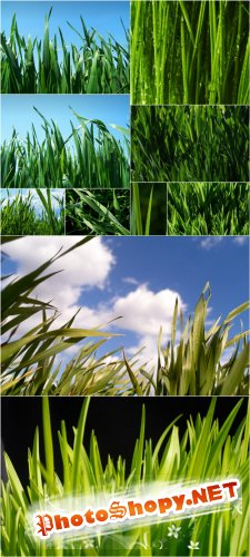 Photo Cliparts - Grass