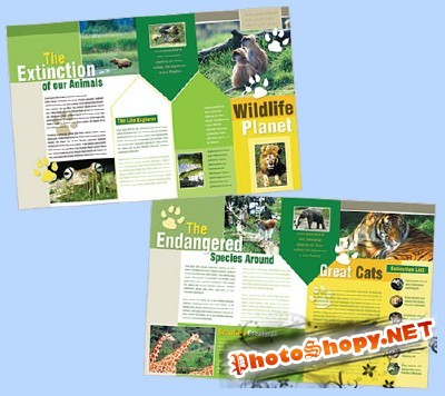 Templates for Design - World Creatures Brochure 11 x 8.5 BoxedArt