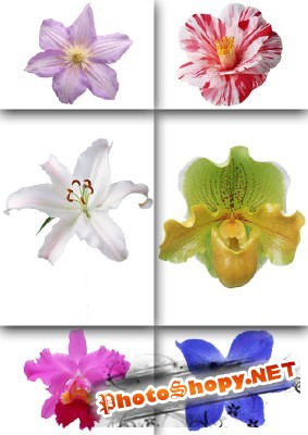 PSD Exotic Flowers for Photoshop