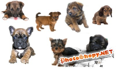 PSD for Photoshop - Little Dogs