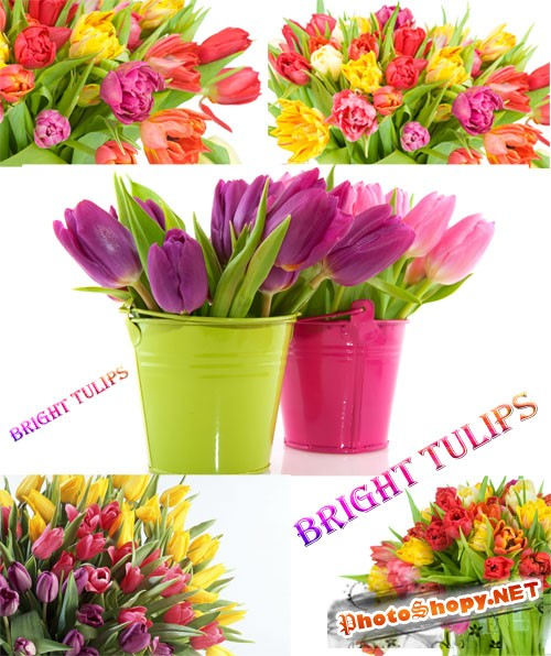 "Wallpapers ""Bright Tulips"""