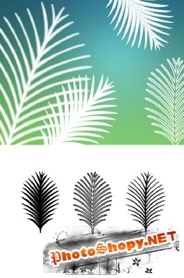 Palm Fronds Brushes Set for Photoshop