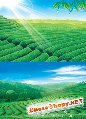 The green fields of lush grass psd for Photoshop