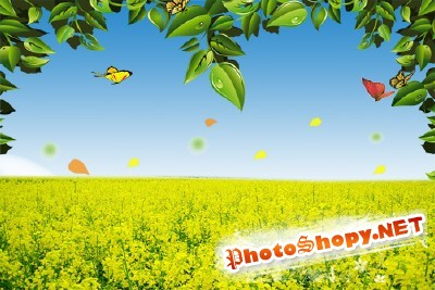 A large field of yellow flowers psd for Photoshop