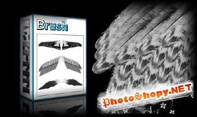 Wings Brushes Set for Photoshop