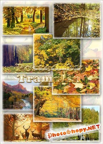 Клипарт – Осенние пейзажи - Кроет уж лист золотой влажную землю в лесу