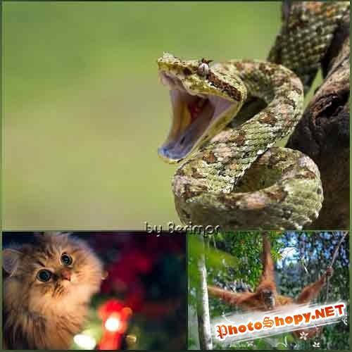 Обои из мира отличных и разнообразных животных