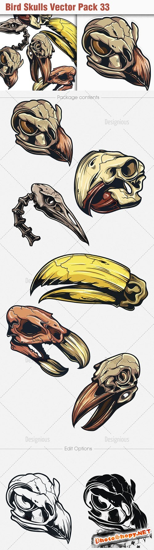 Bird Skulls Vector Illustrations Pack 33