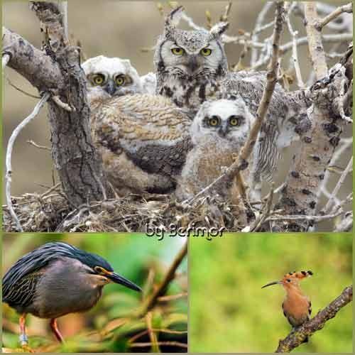 Привлекательные птицы в прелестной природе