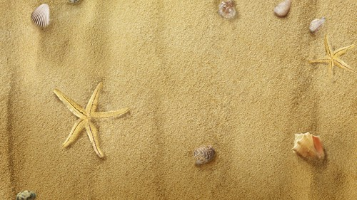 Starfish on Sand PSD